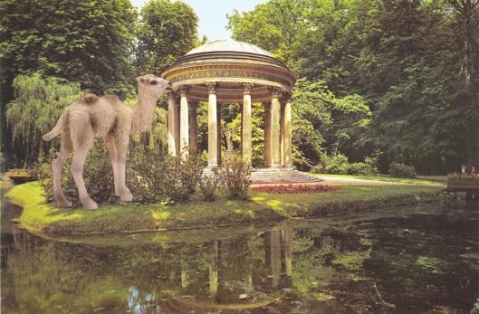 Camel Foal at Versailles