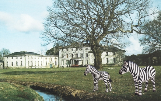 Strokestown Demesne with Zebras