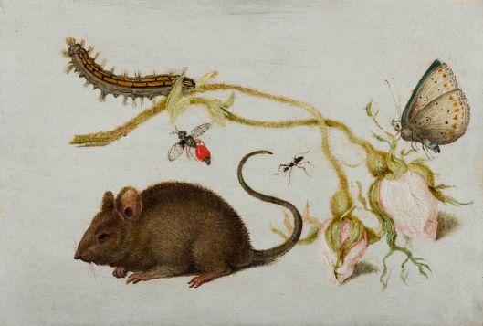Joris Hoefnagel of Jan Brueghel I, Roos muis en insekten