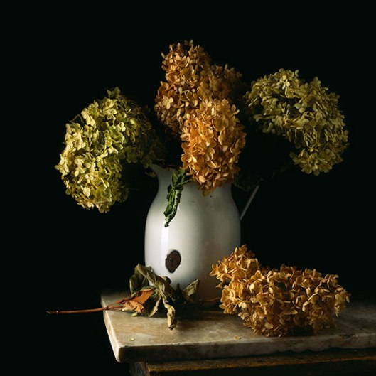 PCG171, Still Life With Tin Pitcher and Hydrangea, 2014, Edition of 10, 22 x 22